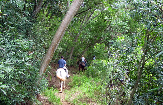 ironwood ranch maui horse riding