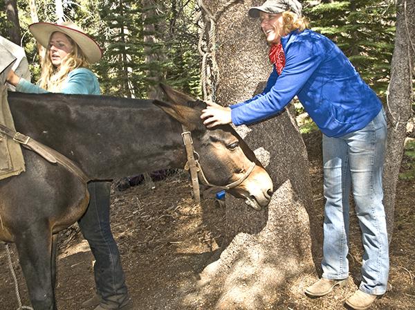 mule pack trip Ansel Adams Wilderness