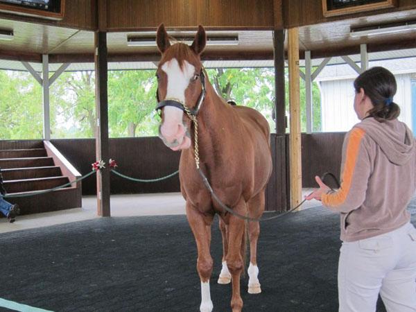 Kentucky Horse Park Be a Bono