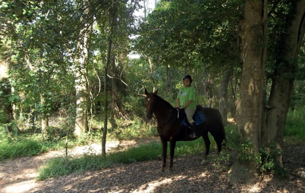 Kentucky Horse Trails Saddlebred