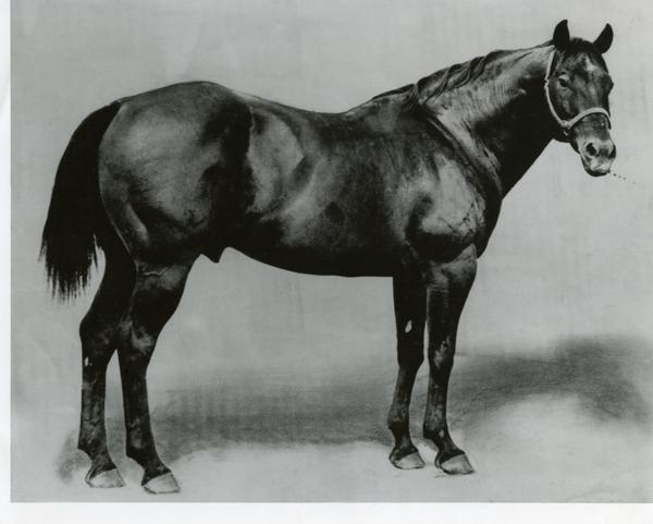 King horse - quarter horses