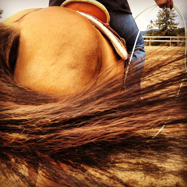 Quarter Horse Tail Kristine Kjaerstad