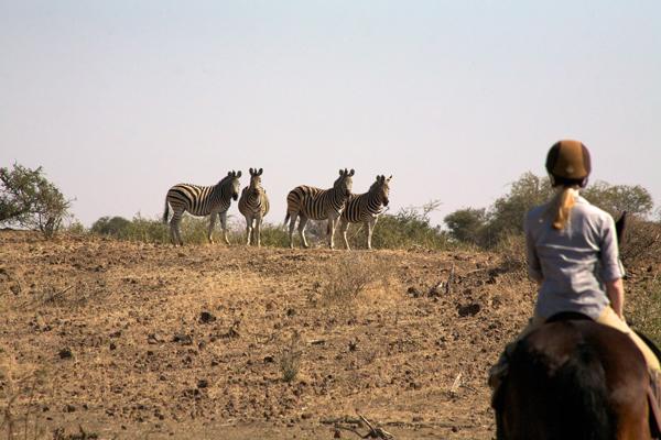 zebra on horseback