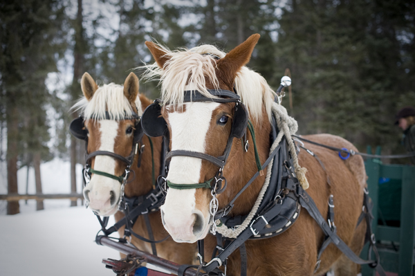 lone mountain ranch, winter sleigh ride