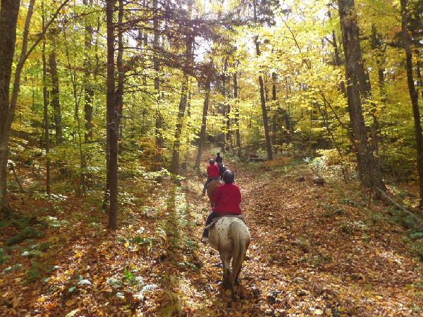 Mountain top inn riding horses