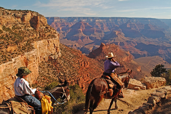 Mule ride Grand Canyon National Park