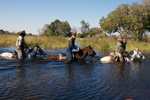 Okavango Delta Swim