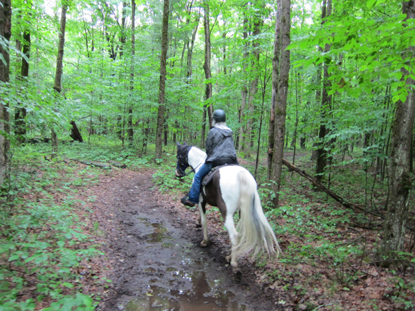otter creek horse trails new york