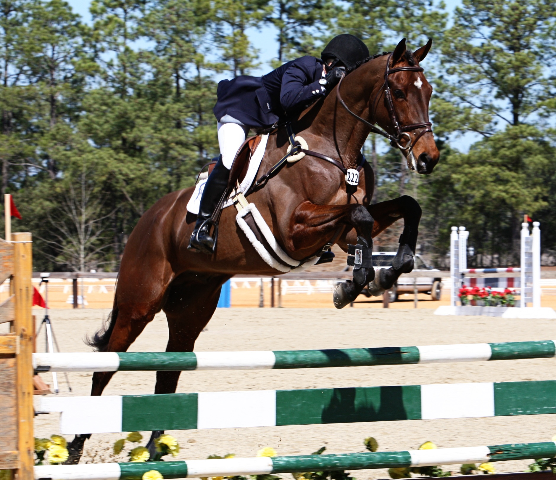Former CANTER horse, Palmer, finds new career