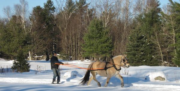 Pat Wolfe Butternut Farm Skijoring