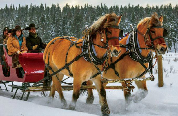 Horse Drawn Sleigh Paws Up