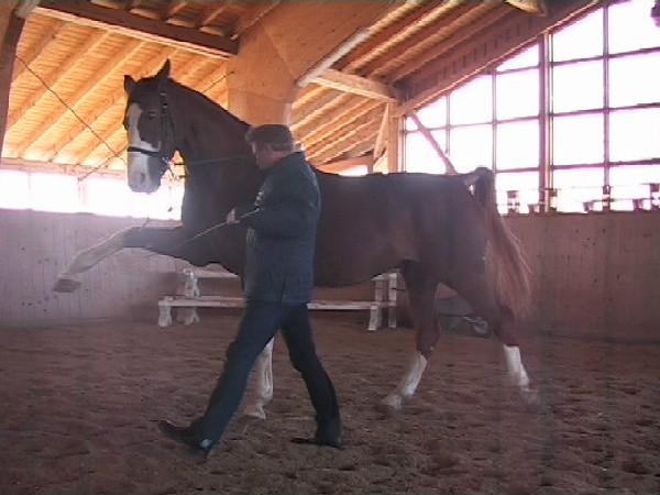 Ralf Schmitzer training the Spanish walk