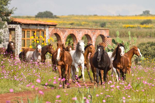 rancho las cascadas horseback riding vacation