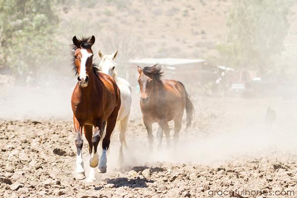 Rancho horses Mexico