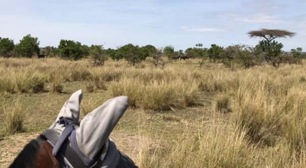 kenya horseback safaris