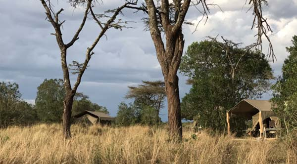 Luxury tents in the Mara