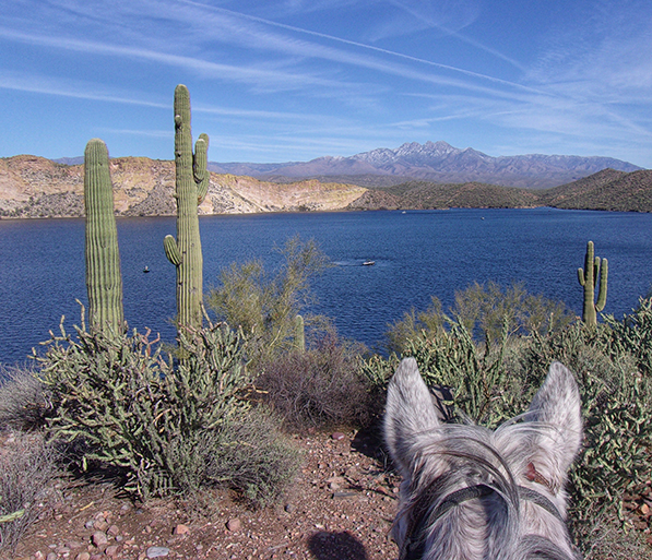 between the ears view from horseback of saguaro lake arizona