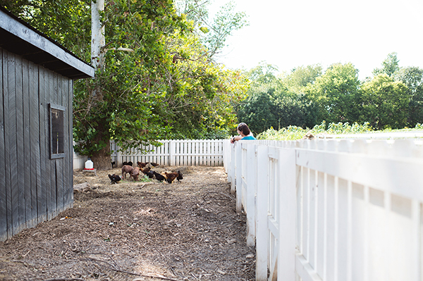 Shaker Village Chickens Pigs Compost