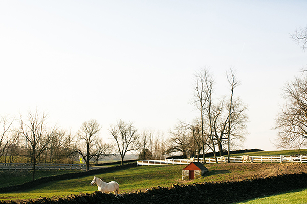 Shaker Village Percheron Pasture