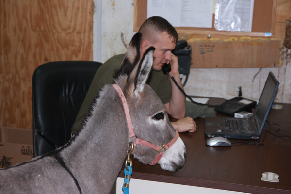 Smoke the Donkey in Office