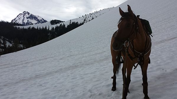 horse riding snow picture shows Takoda on 2014 in the Three Sisters area of Oregon