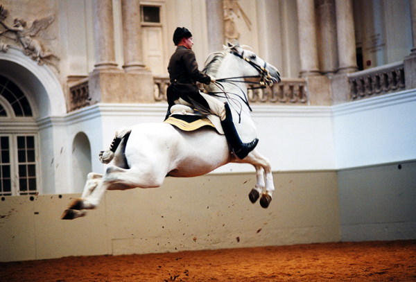 Spanish riding School Lipizzaner horses