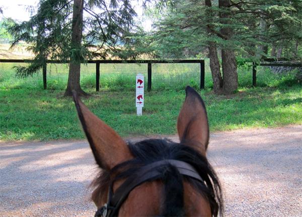 State Arboretum of Virginia equestrian trails