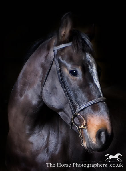 The gallery for --> Professional Horse Photography Gallery