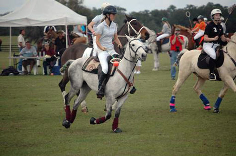 Florida Cracker horse polo