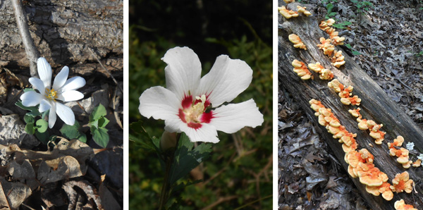 Flora and views on Rocky Gorge Trail
