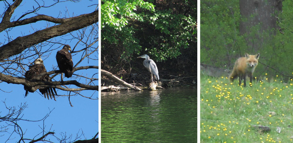 Wildlife on the Rocky Gorge Trail in Maryland