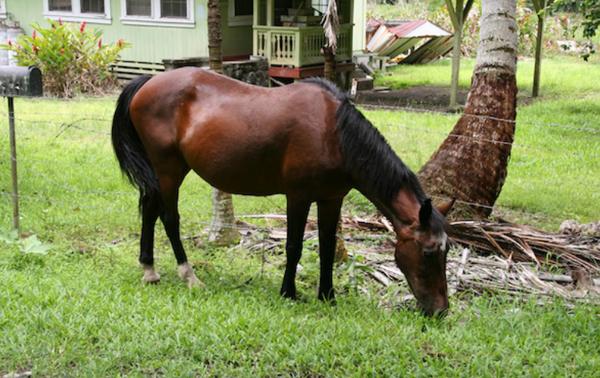 Big Island horse riding