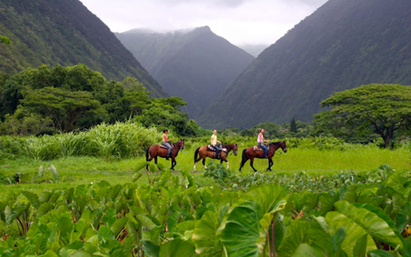 hawaii horse riding waipi'o valley