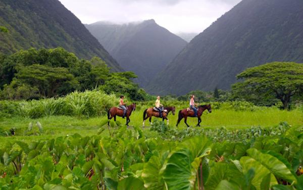 hawaii horse riding waipi'o valley