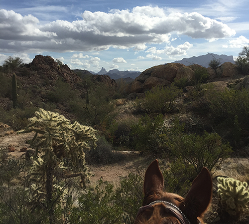 Weavers Needle horse riding arizona