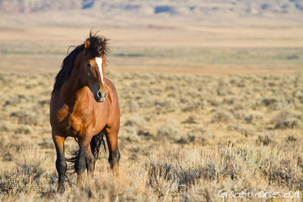 Equestrian Travel Articles Photographing The Wild