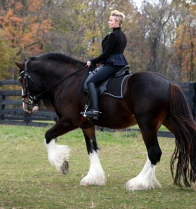 Horse Breed Guide - The Shire Horse Breed Profile ...