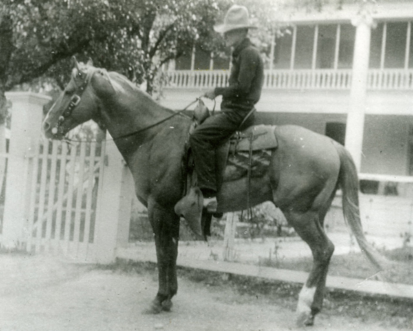 Yellow Jacket horse - famous horses in history