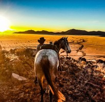 The Hardy Quarter Horses of Namibia Breed Profile