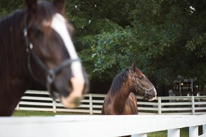Horse Lover's Vacation at Shaker Village of Pleasant Hill