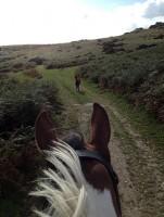 Dartmoor Derby UK Horse Riding Weekend