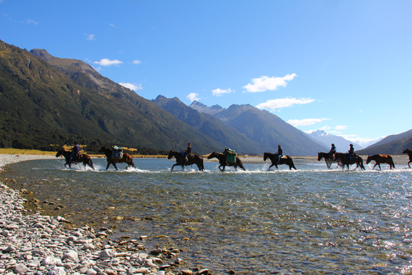 guests horseback riding through a stream in New Zealand hosted by Adventure Horse Trekking