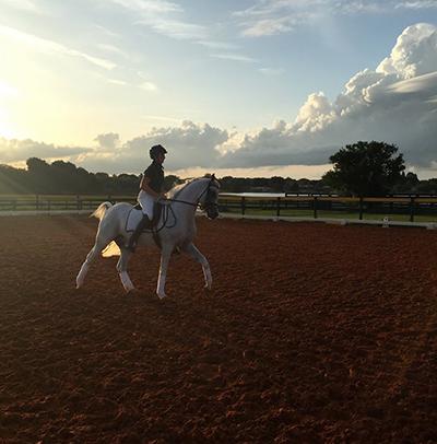 Al Marah Arabians Horses