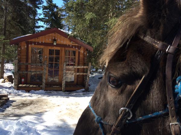 alaska horse trails