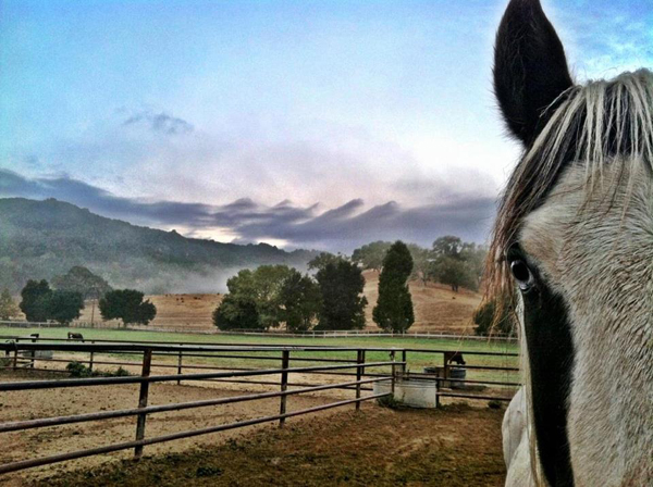 alisal ranch horses california