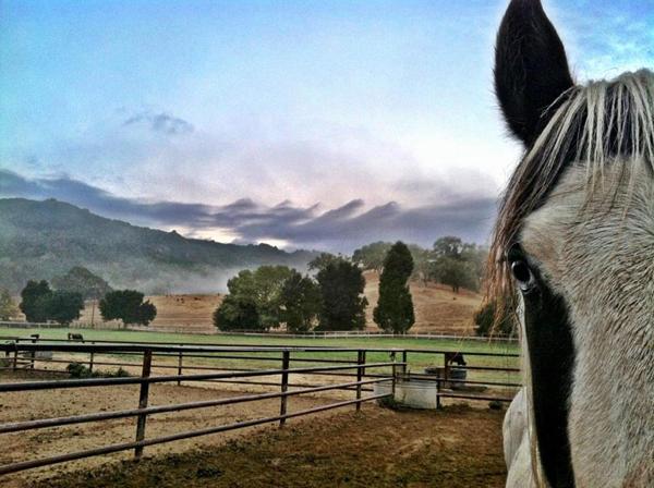 alisal ranch horses california
