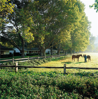 alisal ranch pastures