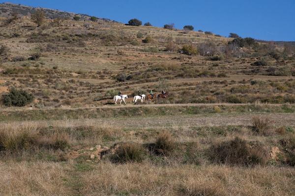 Alpujarras horse