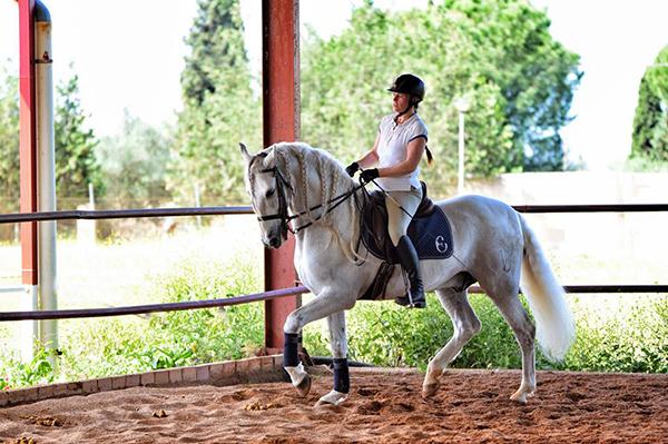 spain andalusian horses