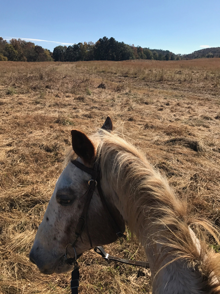 appaloosa horse in open pasture trail riding
